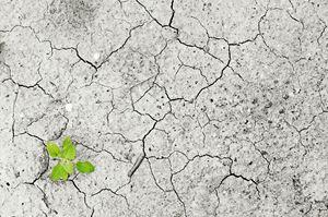 Unterrichtsmaterialien zu Umweltthemen für alle Zyklen